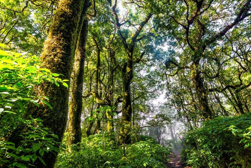 泰国的秋天季节的树森林 库存图片