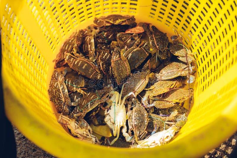 泰国萨塔希普区川布里通普龙格湾红树林中CSR黄塑笼内虎蟹 库存照片