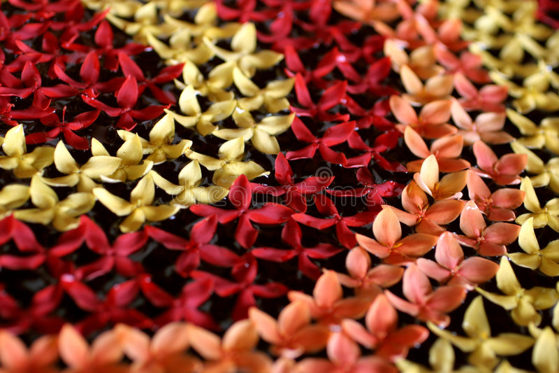 泰国装饰的花 库存照片