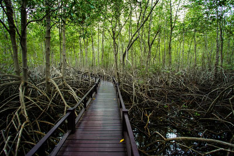 泰国,桥梁-被建立的结构,森林,黑暗,小径 免版税库存照片