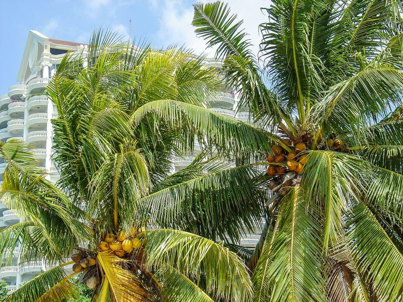 泰国,热带树 库存照片