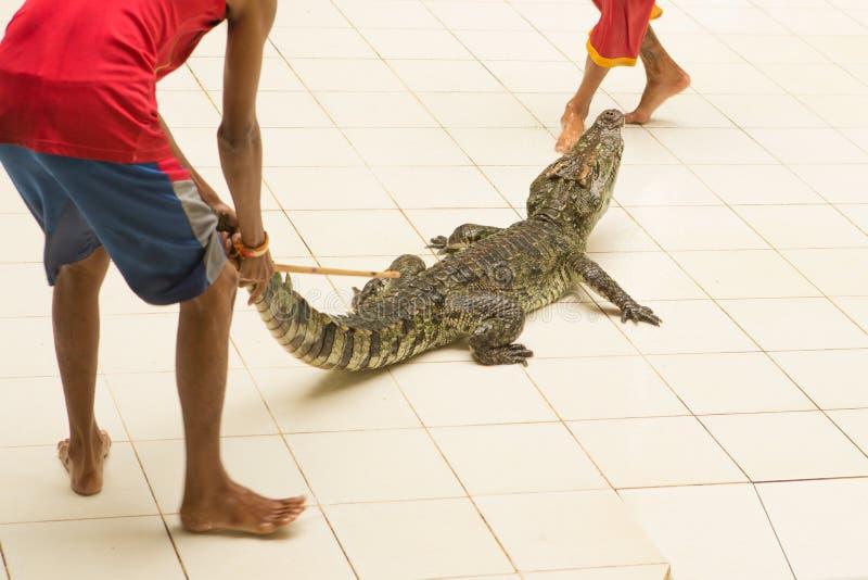 泰国,鳄鱼动物园展示在鳄鱼农场和动物园的 免版税图库摄影