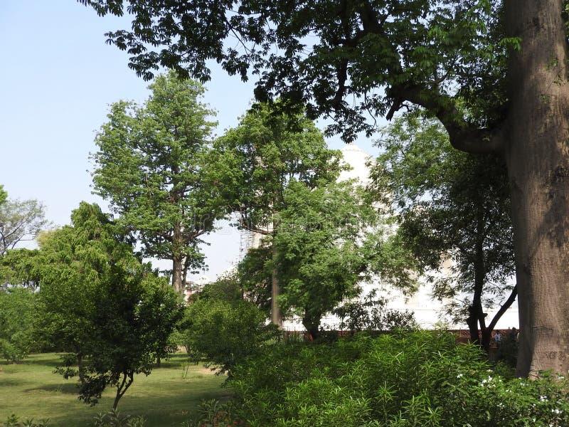 泰姬陵爱,在Yamuna河的南岸白色象牙大理石的陵墓和标志在阿格拉,Uttar印度城市 库存照片