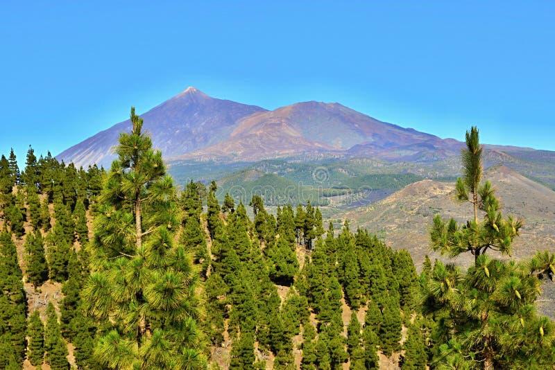 泰德峰(休眠火山),特内里费岛,加那利群岛,西班牙,欧洲 库存图片