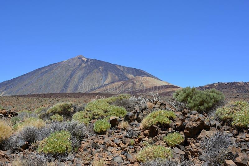 泰德峰(休眠火山),特内里费岛,加那利群岛,西班牙,欧洲 免版税库存照片