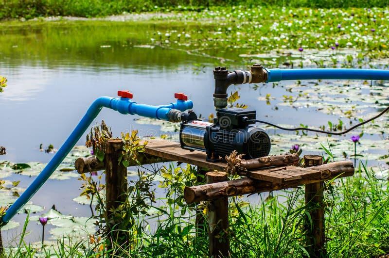 水泵供应庭院农厂在领域的草莓莓果 库存图片