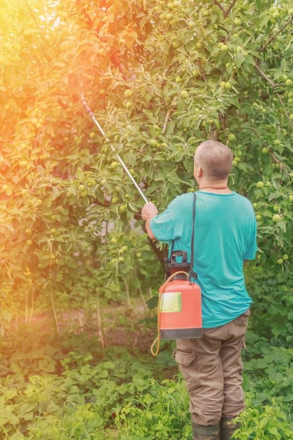 洒从寄生生物的苹果由农夫 库存照片