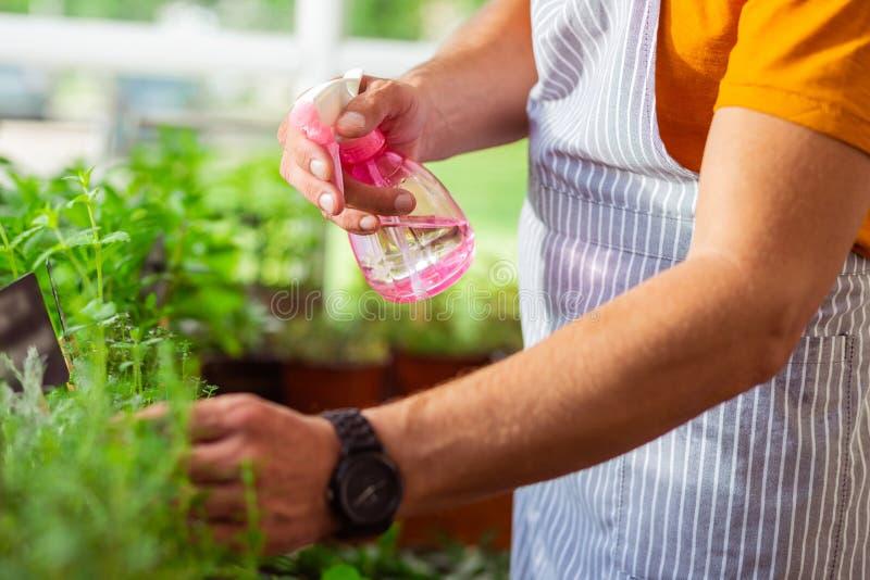 洒植物的卖花人的手用水 图库摄影