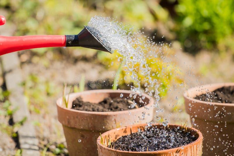 洒水罐喷头和植物盆 库存照片