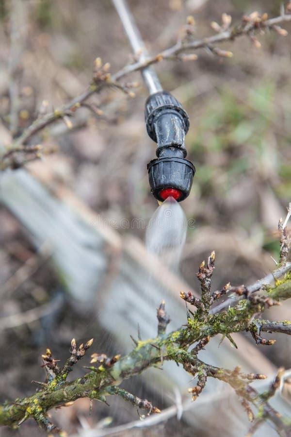 洒鹅莓与杀真菌剂 库存图片