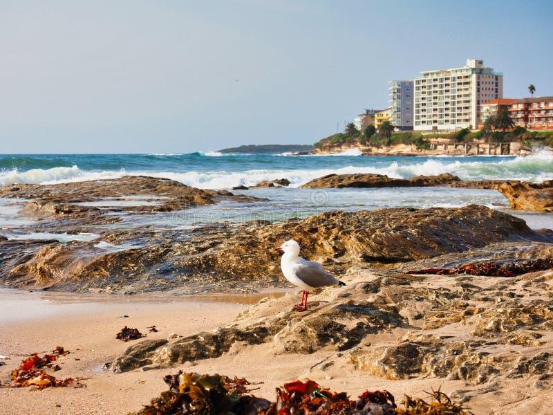 洗涤在海洋岩石,克罗纳拉海滩,悉尼,澳大利亚的波浪 库存照片