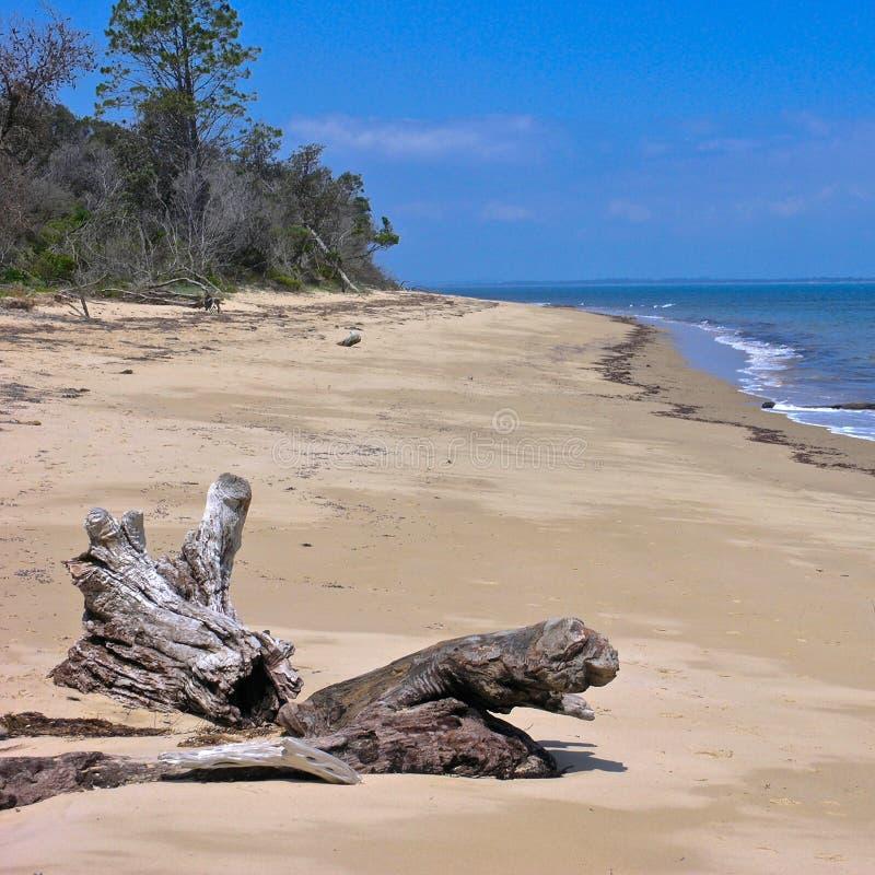 洗涤在海滩的漂流木头 免版税库存图片