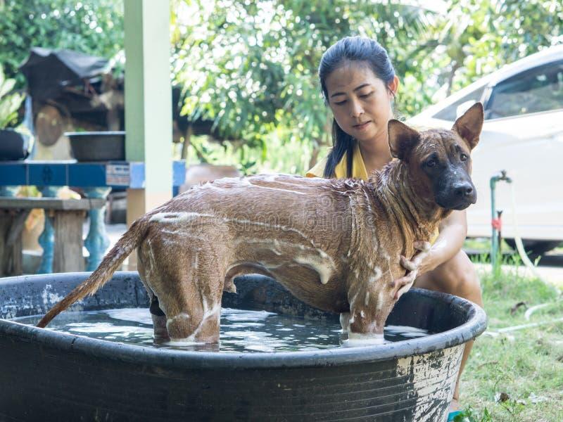 洗涤泰国Ridgeback狗的亚裔妇女 免版税库存图片