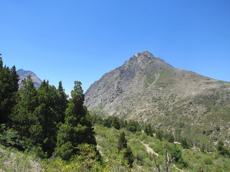洛安第斯山脉与安第斯柏树 免版税库存照片