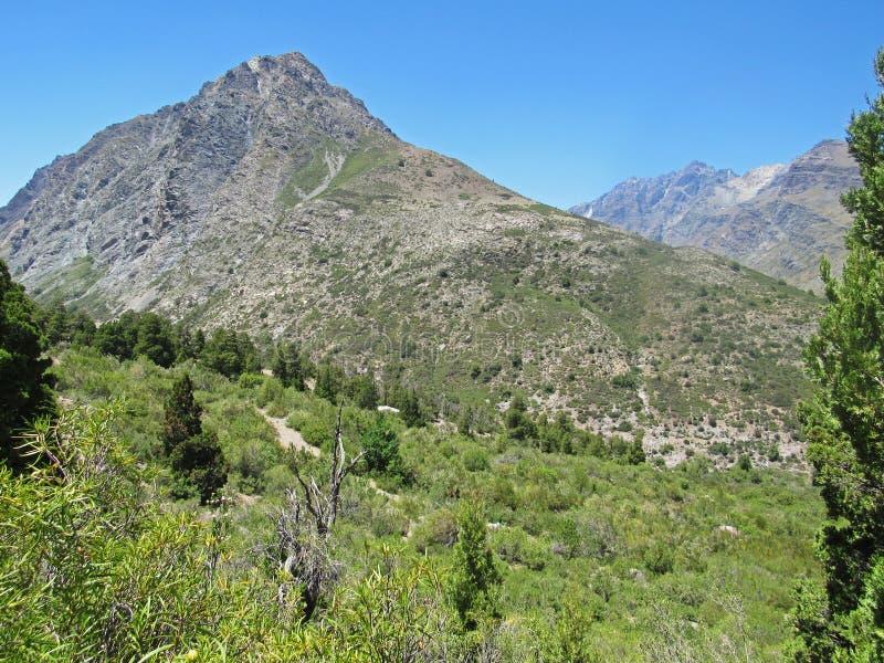 洛安第斯山脉与安第斯柏树 免版税库存图片