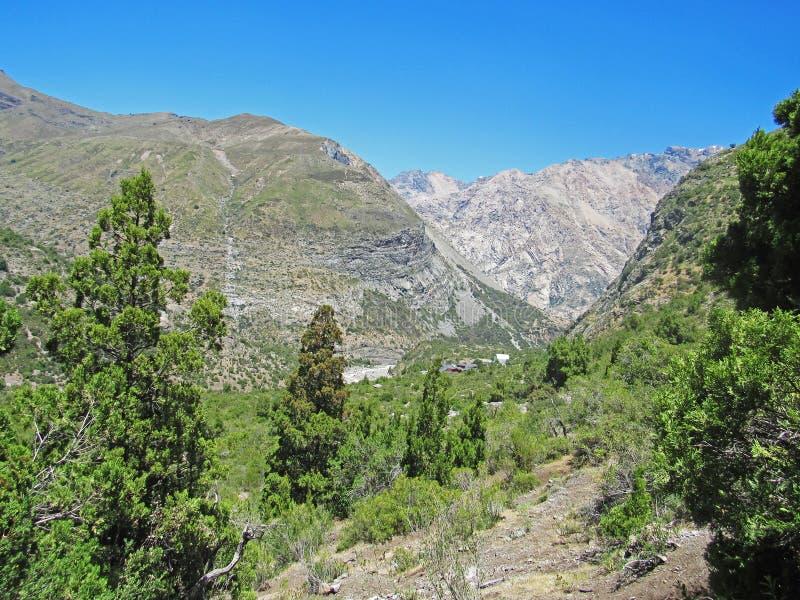 洛安第斯山脉与安第斯柏树 图库摄影