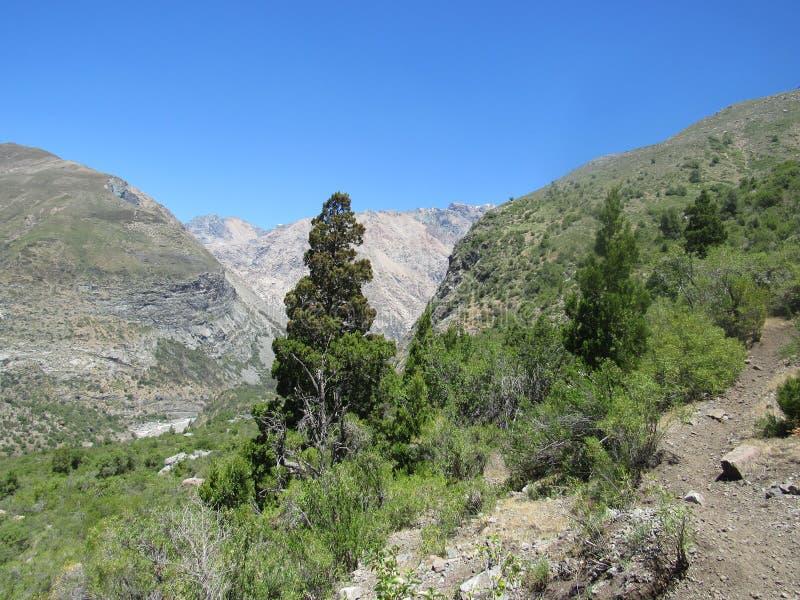 洛安第斯山脉与安第斯柏树 库存照片