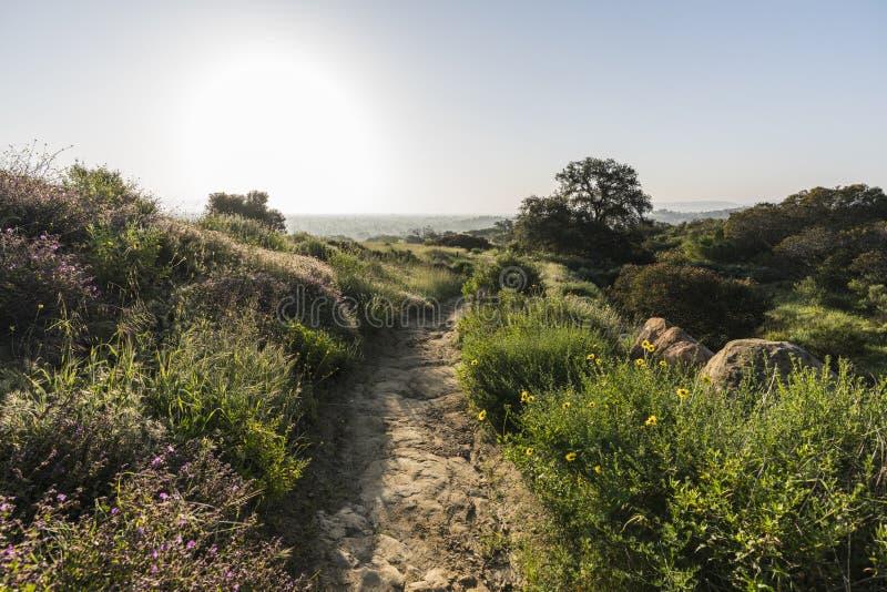 洛杉矶自然公园春天草甸 库存图片