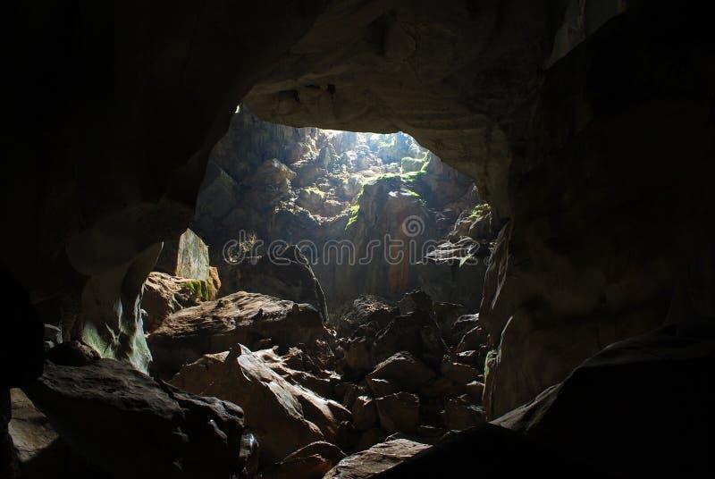 洞密林 库存照片