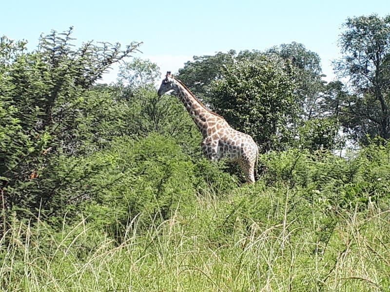 津巴布韦一个自然天堂 库存照片