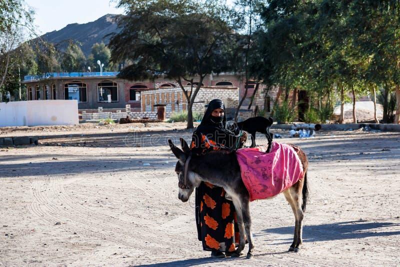 洪加达,埃及2010年2月22日:未认出的流浪的妇女和骡子在埃及 免版税库存照片