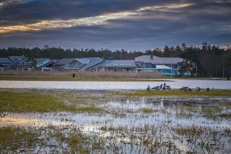洪水和鸟 免版税图库摄影