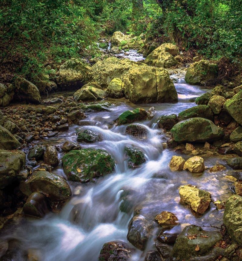洪流在一个狂放的森林里 免版税库存图片
