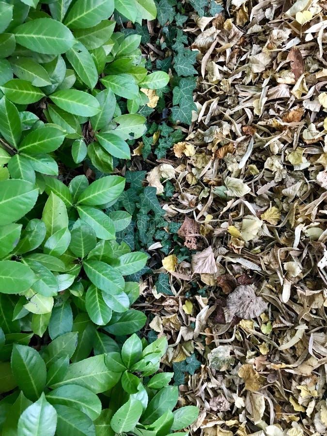 活和死的叶子 免版税图库摄影