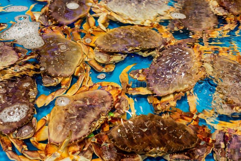 活海洋螃蟹待售在上海超级市场 免版税图库摄影