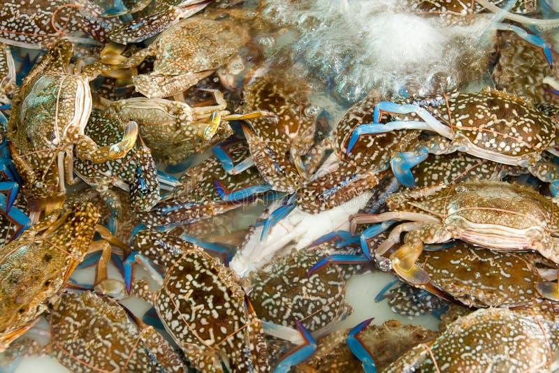 活螃蟹在水中 免版税图库摄影