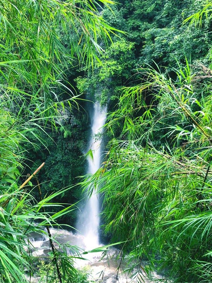 流动从峨眉山的小瀑布 库存图片