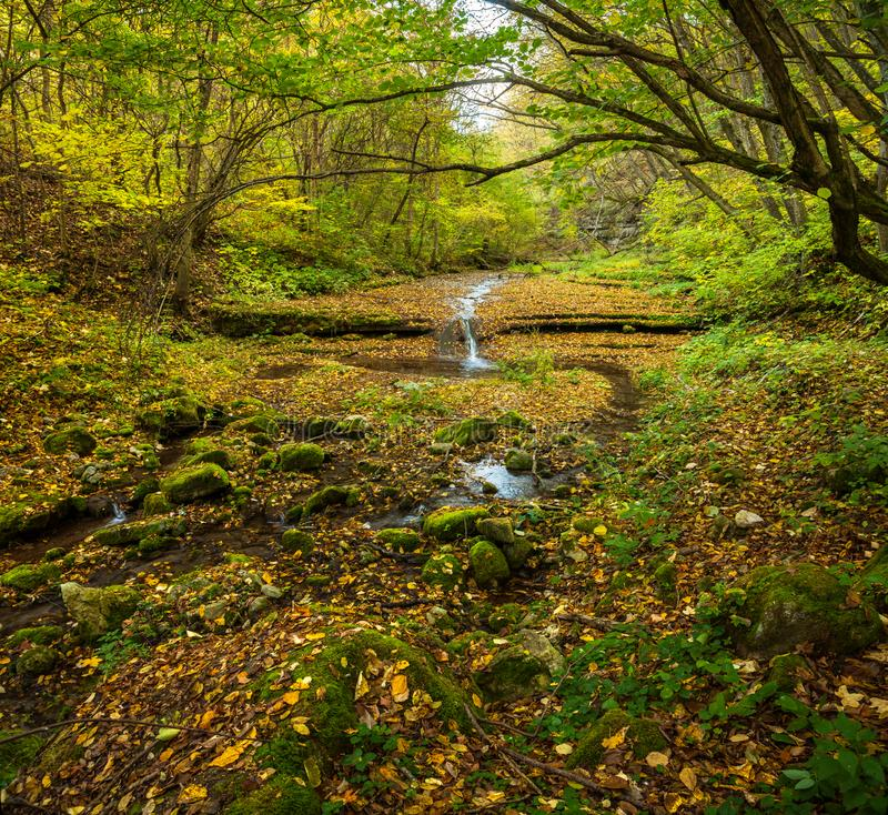 流动在森林的小河 图库摄影