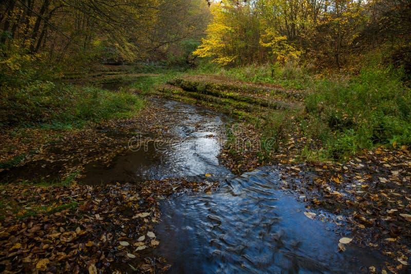 流动在森林的小河 免版税图库摄影
