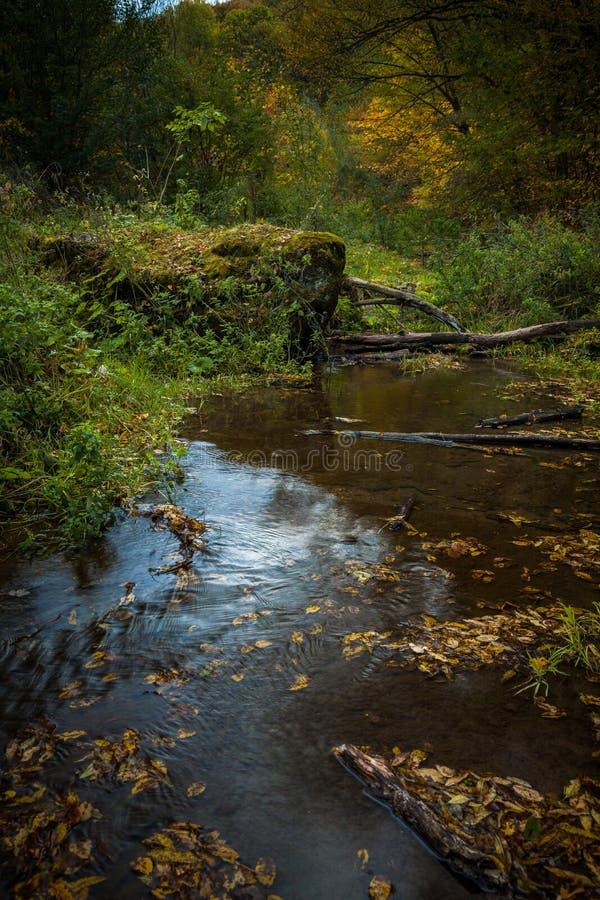 流动在森林的小河 库存照片