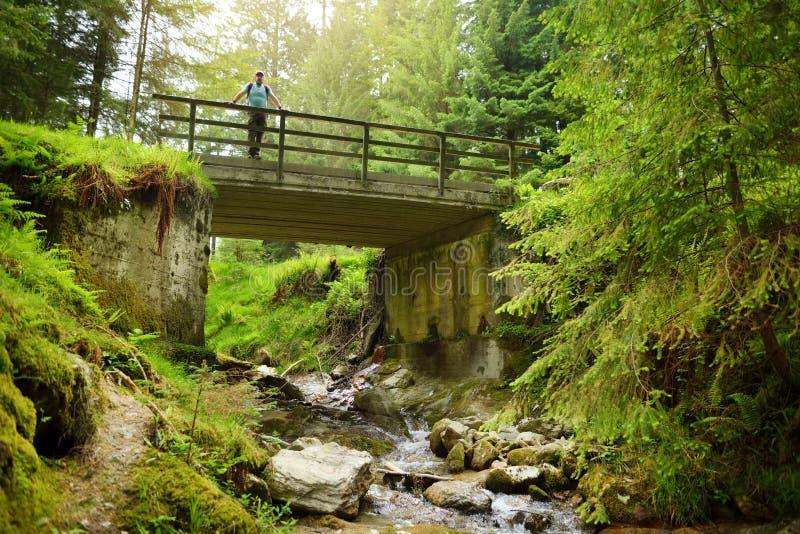 流动横跨威克洛山脉国立公园森林地的美丽的狭窄的小河  威克洛郡,爱尔兰 免版税图库摄影