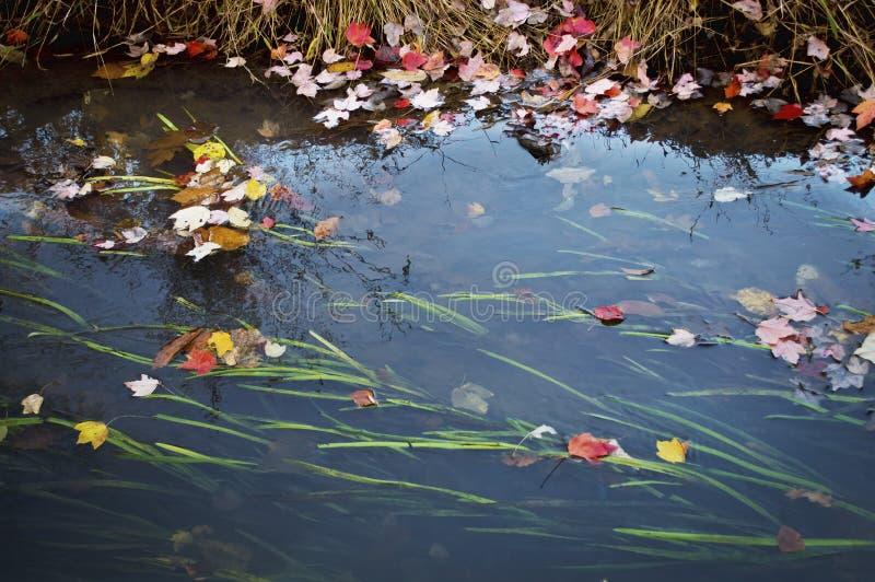 流动的叶子 免版税库存照片