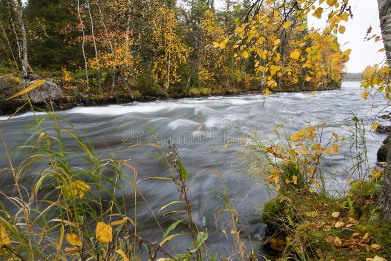 流动的河和autum森林背景的 免版税图库摄影