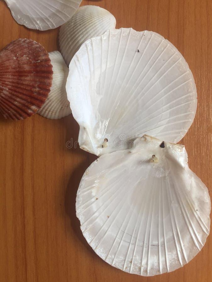 图片 包括有 鸟蛤, 移动, 贝壳, 手工制造, 材料, 蛤蜊, 扇贝图片
