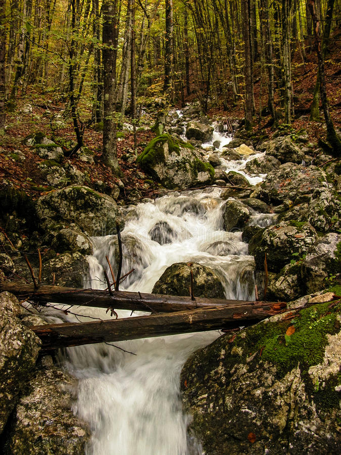 流在森林里。 划分为的结构树。 秋天。 斯洛文尼亚 免版税库存照片