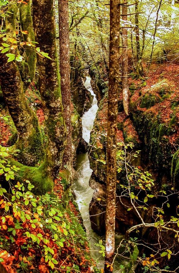 流在森林里。 秋天。 斯洛文尼亚。 库存照片