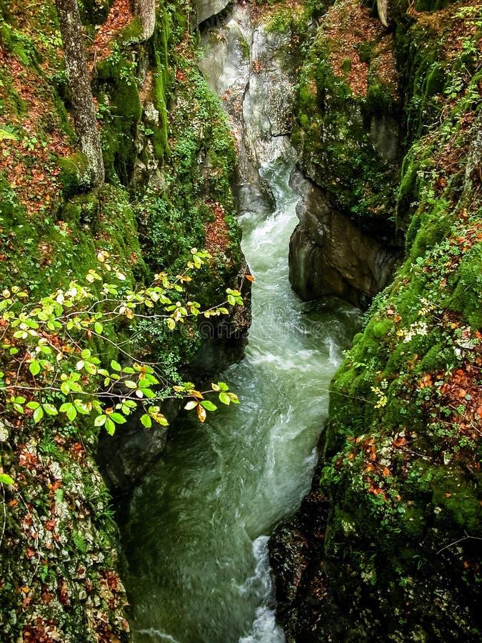流在森林里。 秋天。 斯洛文尼亚 免版税图库摄影