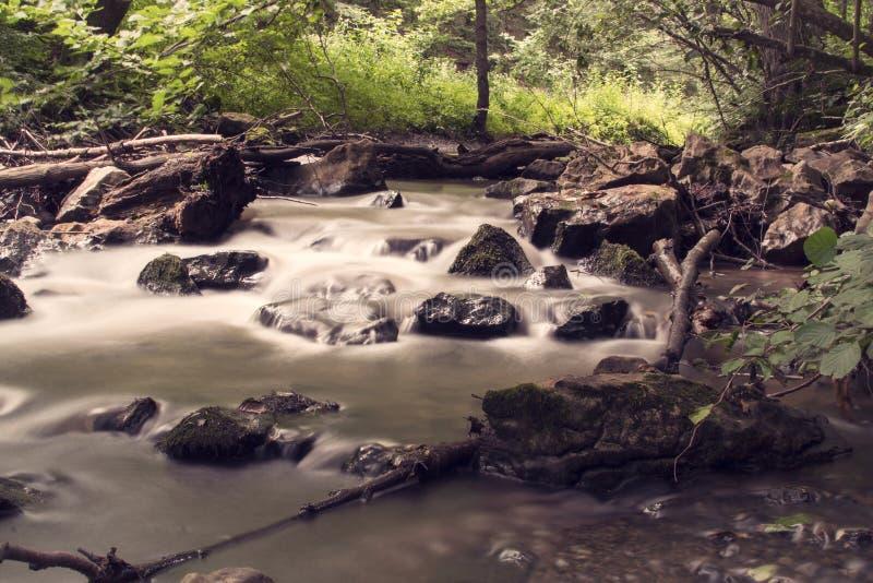流在森林里 免版税图库摄影