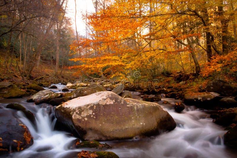 流在秋天森林里 免版税库存图片