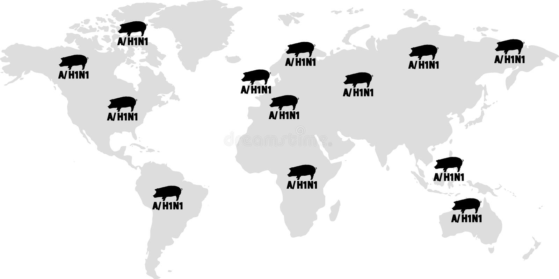 流感h1n1危险等级全世界猪警告 皇族释放例证