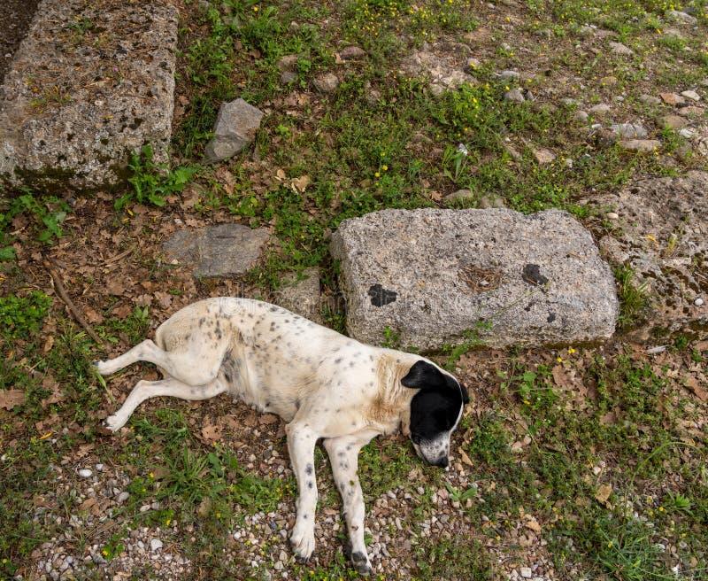 流浪狗睡着在第一奥林匹克的站点在奥林匹亚在希腊 库存照片
