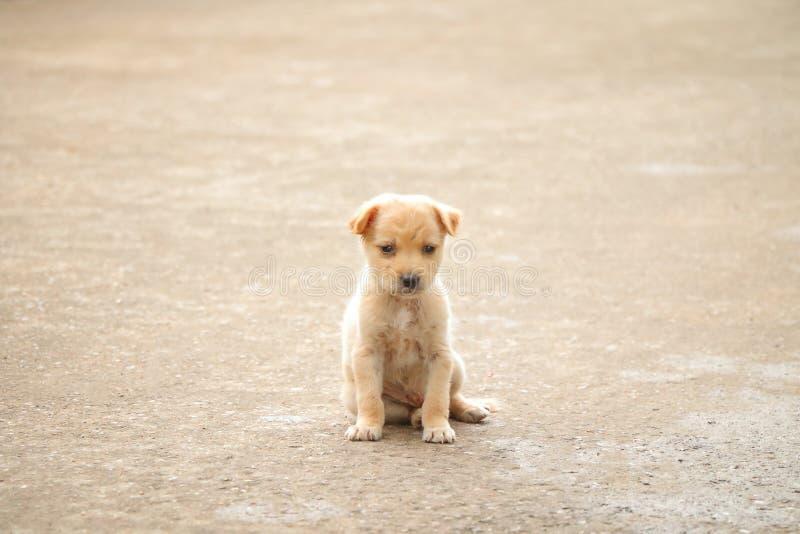 流浪狗饥饿的食物 免版税库存图片
