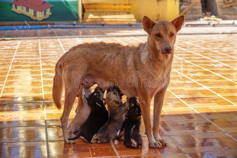 流浪狗:哺乳的小狗 免版税图库摄影