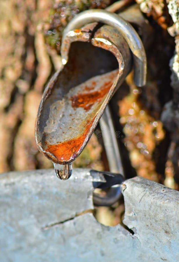 流的树汁轻拍 免版税库存图片