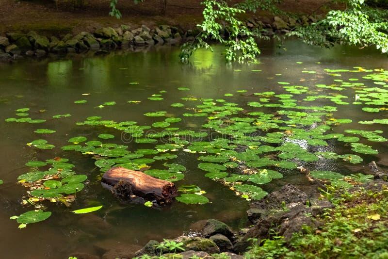 流经一个镇公园的小河在德国南部 库存照片