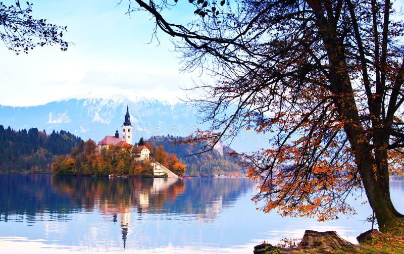流血的欧洲湖斯洛文尼亚丝毫 免版税库存照片